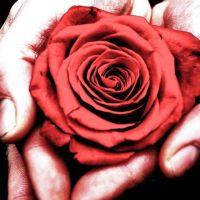 Una rosa parla d'amore silenziosamente...
