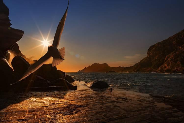 Il tuo cuore è un gabbiano che vola libero nei cieli della vita. Lascialo andare senza paura, ti saprà condurre alla felicità.  Sergio Bambarén